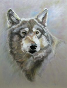 "© Laura Gabel, ""Austin's Wolf"". Soft pastel, 18 x 24. Private collection."