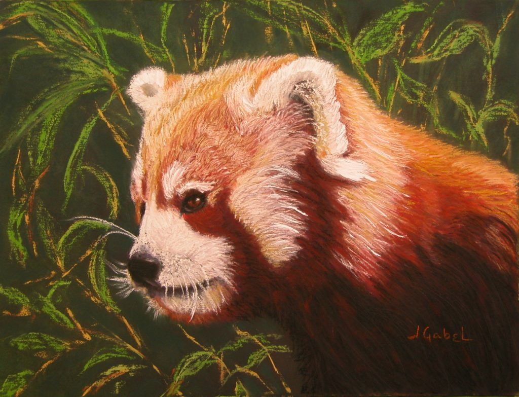 "What's Your Passion? © Laura Gabel, ""Red Panda 2"". Pastel, 16 x 13. Private Collection."