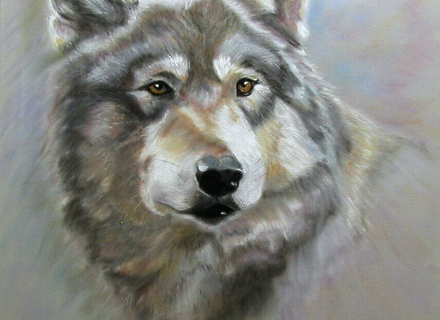 """© Laura Gabel, """"Austin's Wolf"""". Soft pastel, 18 x 24. Private collection."""