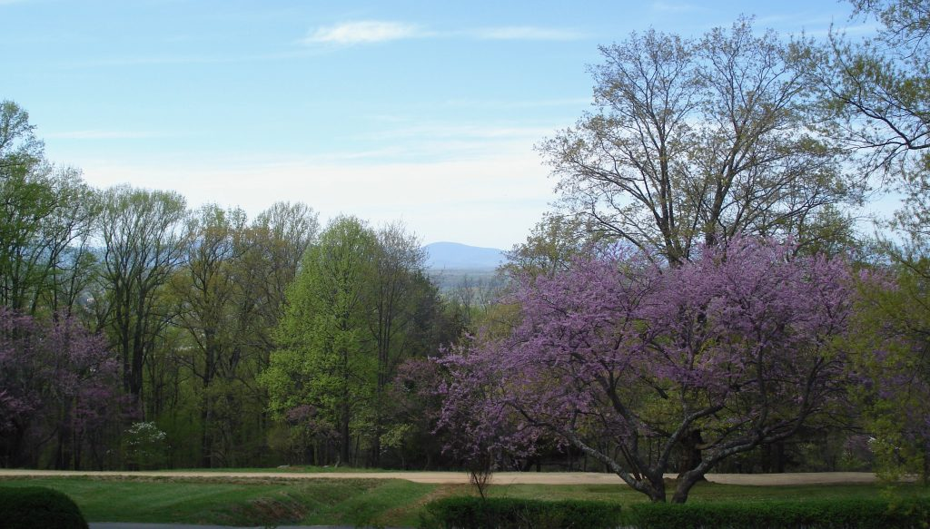 red bud and mountains - serve blog