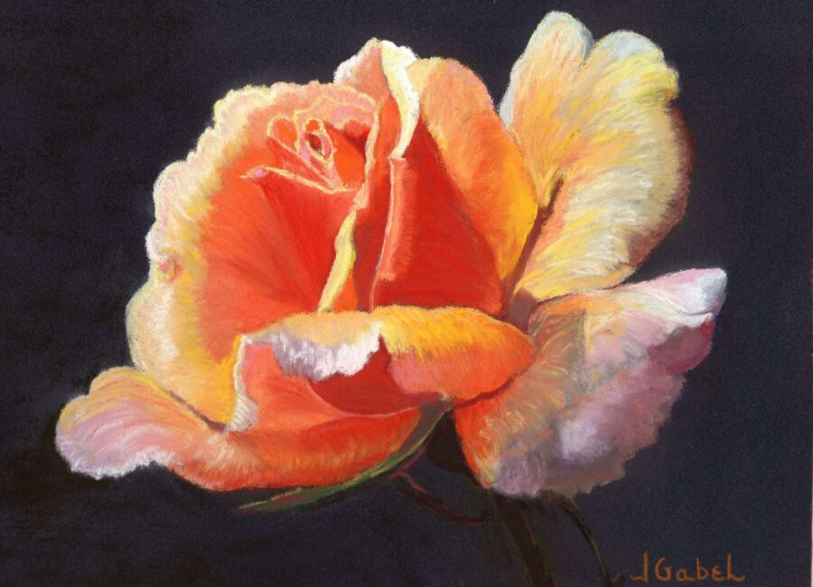 "© Laura Gabel, ""Lesla's Rose"". Pastel, 8x10. Private collection."