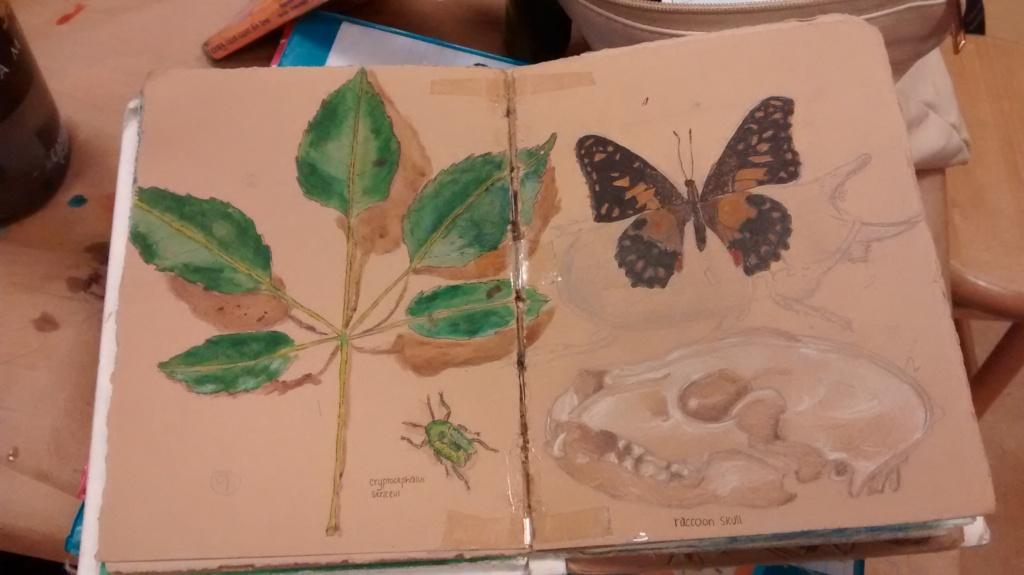 teacher student blog, leaf & butterfly