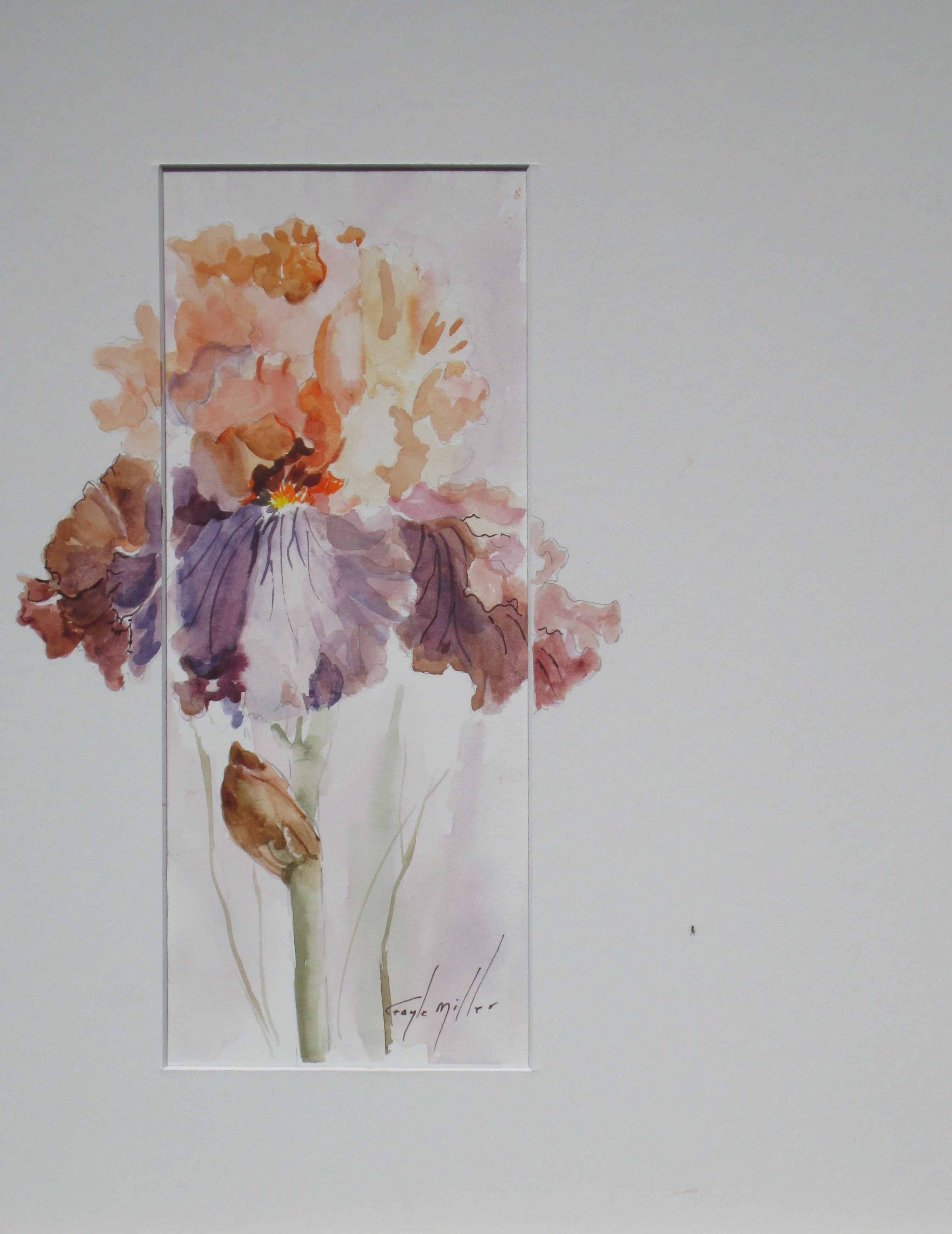 Off Set Peach & Wine Iris, size 4x10  Framed size 11x14, Watercolor. $125.00